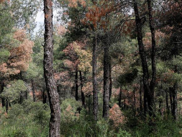Θεσσαλονίκη: Άμεση απαγόρευση της κυκλοφορίας στο δάσος του Σέιχ Σου