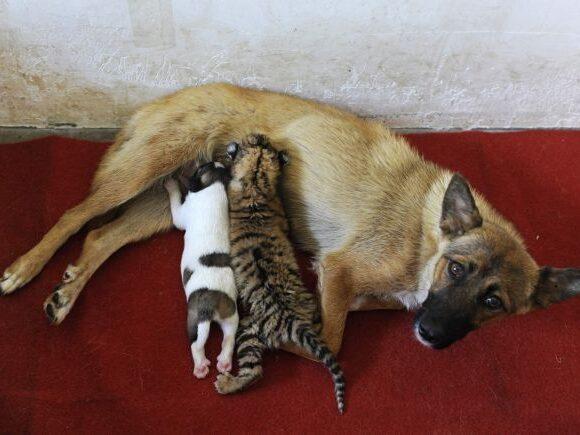 Κοροναϊός: Η πρώτη πόλη της Κίνας που απαγόρευσε το κρέας σκύλου και γάτας
