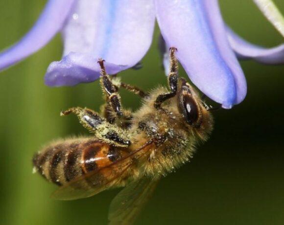 Σημαντική μείωση των εντόμων παγκοσμίως από τη χρήση εντομοκτόνων