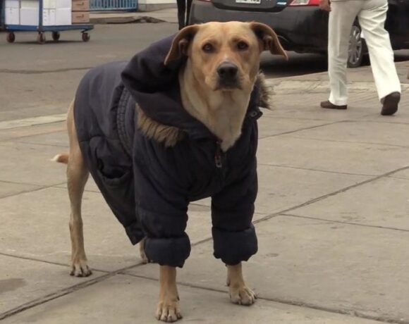Σκύλος περιμένει το αφεντικό του που έχει μολυνθεί με κοροναϊό έξω από νοσοκομείο