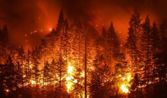 Συναγερμός : 75 πυρκαγιές ξεσπούν καθημερινά στο δάσος του Αμαζονίου