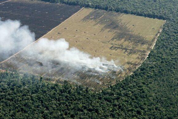 Σοκαριστική μελέτη: Κίνδυνος κατάρρευσης για τα οικοσυστήματα στο ένα πέμπτο των κρατών του πλανήτη
