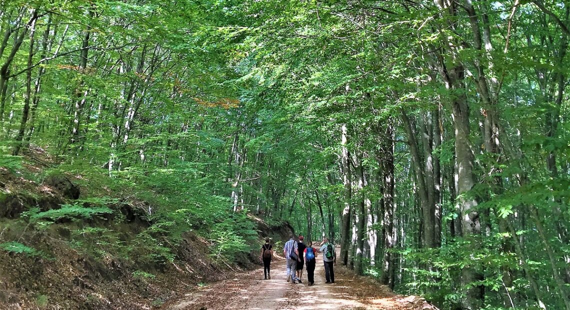 Halkidiki's Aristotle Municipality to Complete Trekking Paths Network in 2021