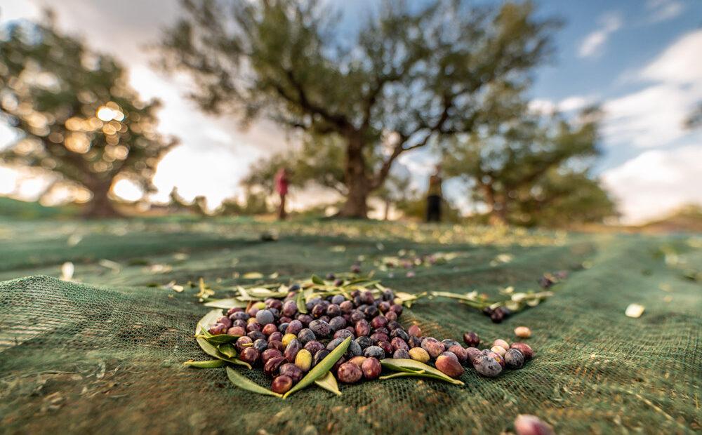 Greece Assumes Presidency of Mediterranean Diet Network for 2021