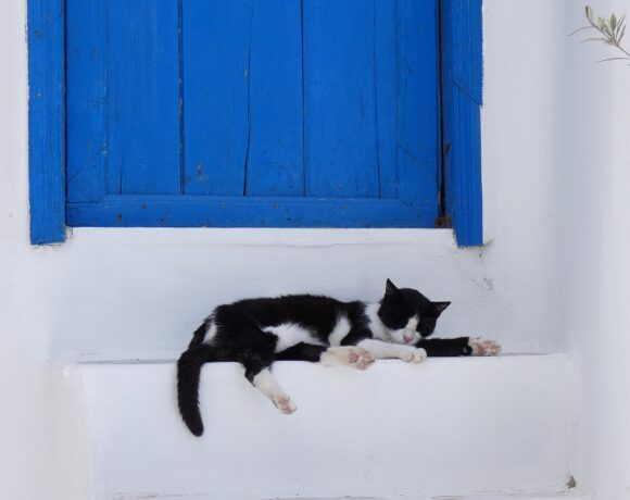 Netflix Films the Cats of Syros Island