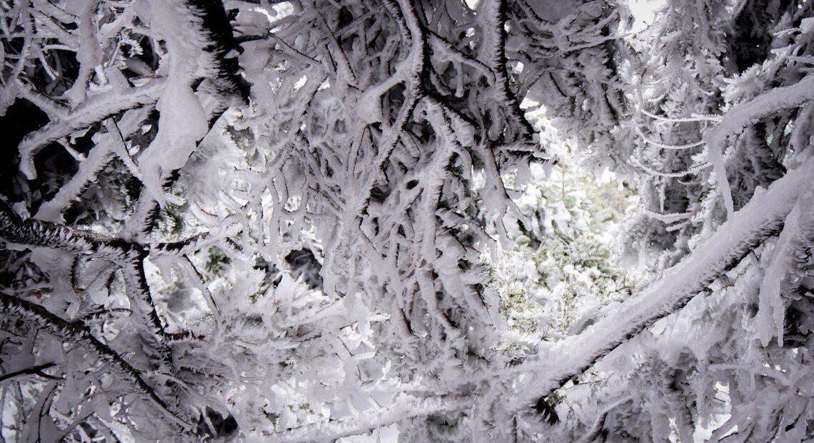 ΔΕΔΔΗΕ: Με άδεια από το Δασαρχείο πραγματοποιείται το κλάδεμα των δέντρων