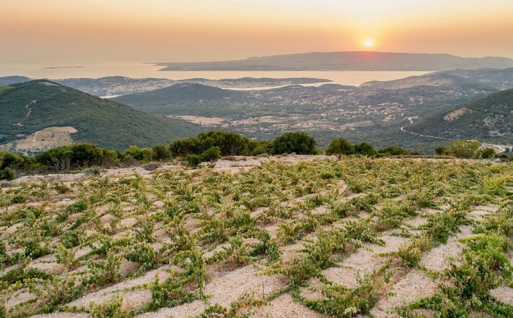 Kefalonia Winemakers Get Together and Form Association