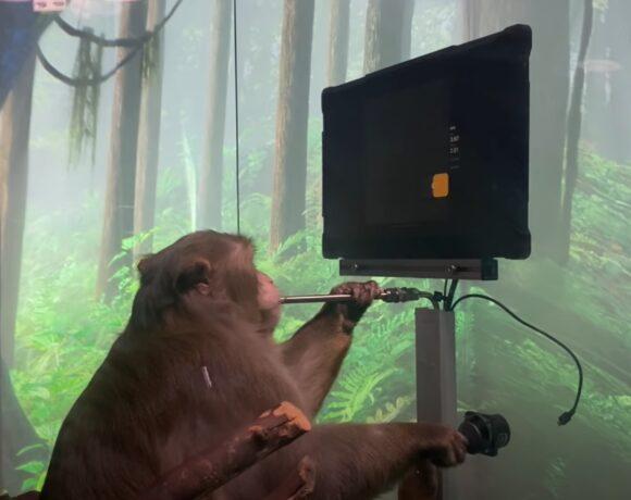 Neuralink: Δείτε έναν πίθηκο να παίζει Pong με το μυαλό του