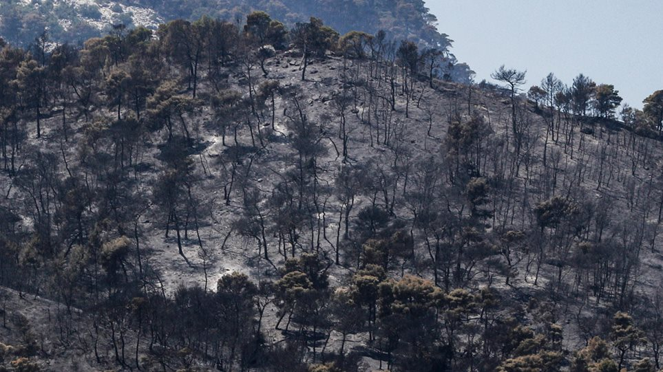 Φωτιά στον Σχίνο: Για βελτιωμένη εικόνα μιλά η Πυροσβεστική – Παραμένουν οι διάσπαρτες εστίες