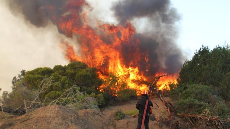 Ηλεία: Μεγάλη φωτιά κοντά στον οικισμό Κορυφή Πύργου – Δεν κινδυνεύουν σπίτια