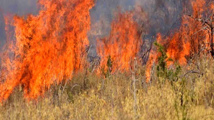 Φωτιά κοντά στους Δελφούς: Περιορίστηκε το μέτωπο ανάμεσα στο Κροκί και στο Λιβάδι της Αράχωβας