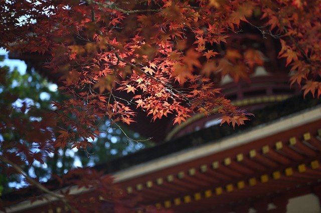 Φθινοπωρινή ισημερία: To φθινόπωρο ήρθε και επίσημα