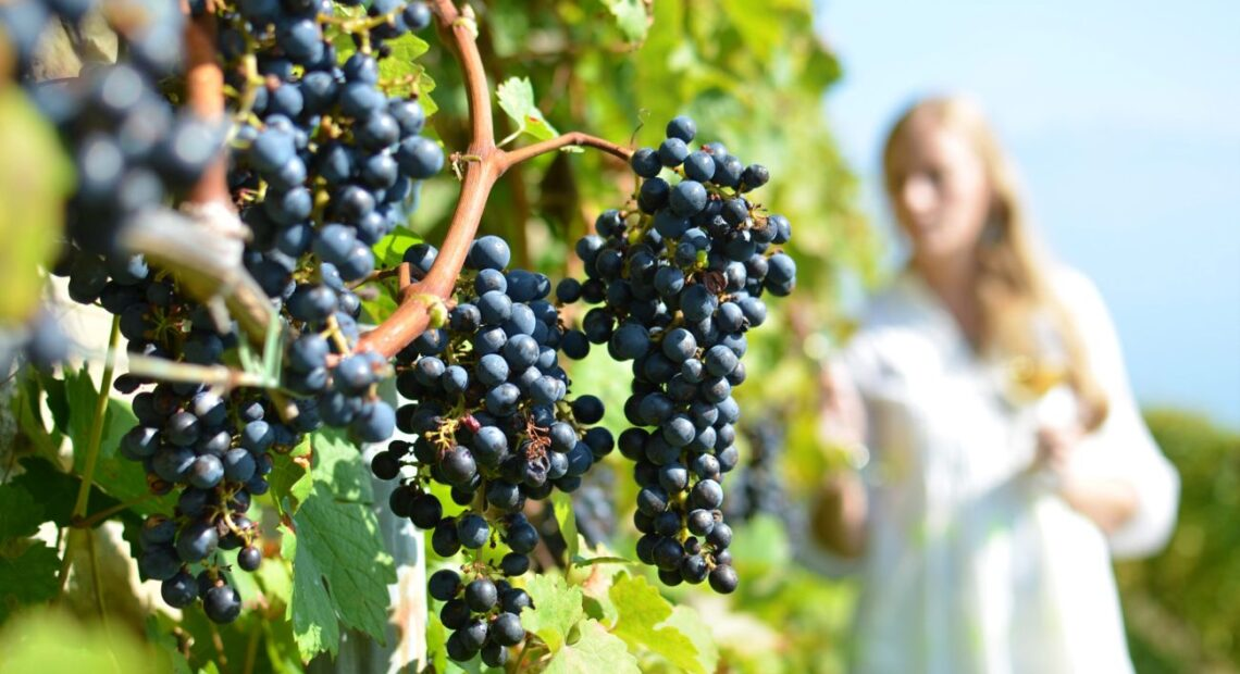 Greece Presents Wine Tourism Strategy at UNWTO Global Event
