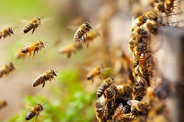 «Plan BEE»: Αποζημιώσεις για ανασφάλιστα μελίσσια που κάηκαν στις πυρκαγιές – Τι σχεδιάζει το υπουργείο